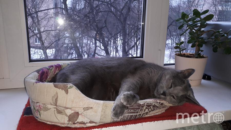 """Наш кот Грей Фокс, или просто Серый. Любовь Летова. Фото """"Metro"""""""