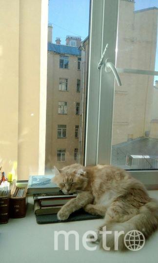 """Кот учёный. Хозяйка Женя Костина. Фото """"Metro"""""""