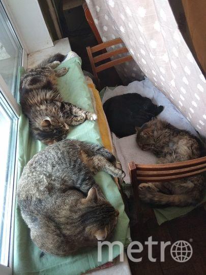 Хоть уже весна на улице, но мои коты любят возле батареи  спать. Место для них это оборудовал в прошлом году, осенью. Фото Владимир Смирнов.