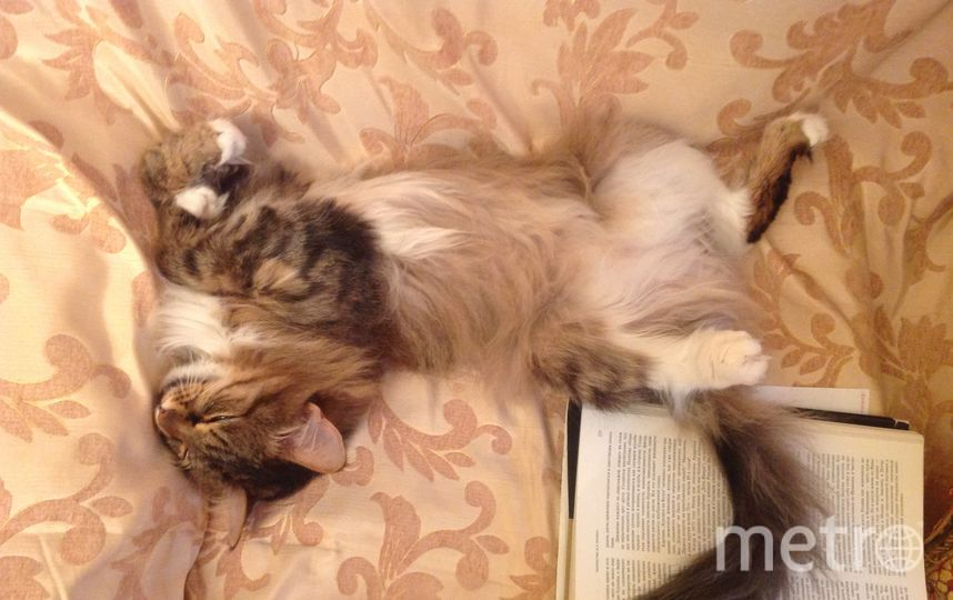 Это наша Китя. Мы очень любим после обеда почитать детектив.  Но дойти до развязки каждый раз не получается. Фото Андрей Гольцов.
