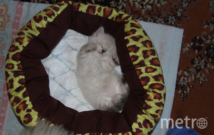 """Уважаема редакция, это мой котенок Василек: """"Во сне все мы растем."""" Фото Елена Кулагина."""