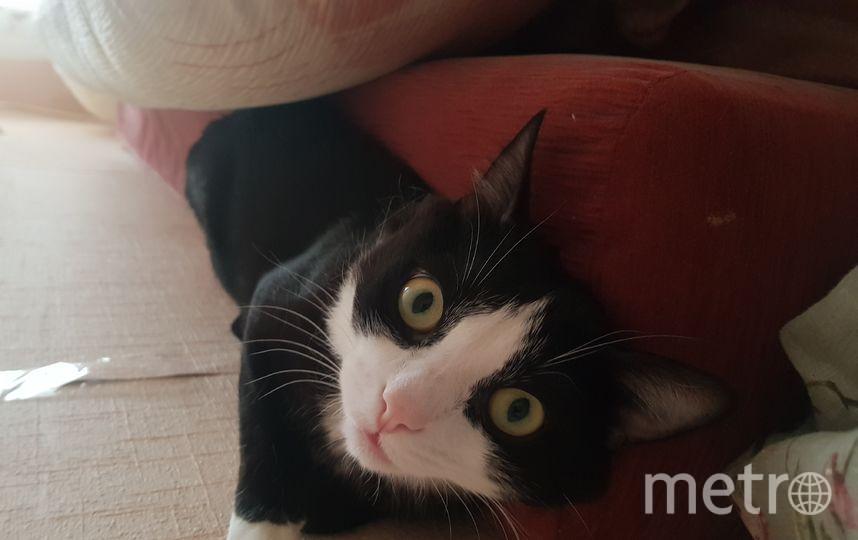 Котик обожает позировать и у него это превосходно получается, чёрно-белая модель. Фото Оксана Матвеева.