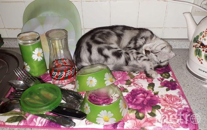 Котика зовут Марс. Он очень любит кусаться и смотреть в окно, любоваться природой. Татьяна. Фото Евгений Гусаров.