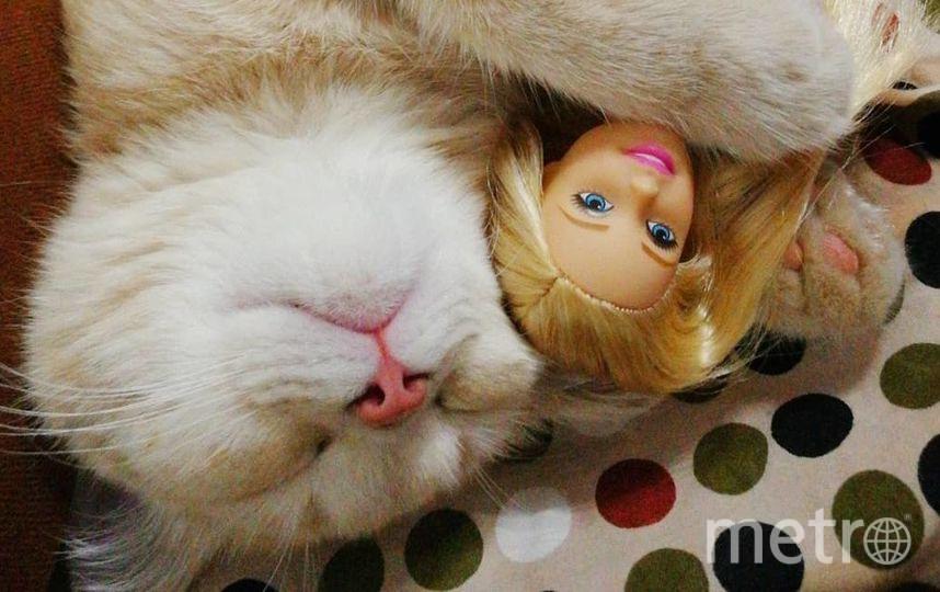 Спящий кот Персик. Фото Алиса Горяченкова.