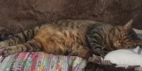 Москвичи присылают милые фото своих спящих котов: снимки растрогают любого
