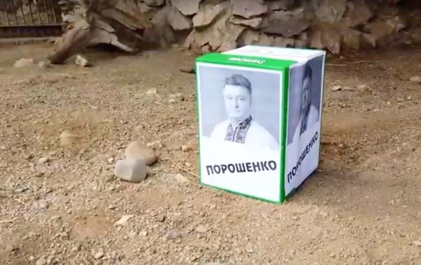 Кандидат на пост президента Украины (и действующий лидер страны) Пётр Порошенко. Фото Скриншот/ Новостное агентство N24 RU, Скриншот Youtube