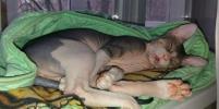 Сонные котики: москвичи присылают милые фото своих питомцев