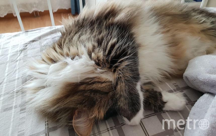 Кот Вася. Когда у него дневной сон, он закрывает глаза лапкой, чтобы солнце ему не мешало. Фото Юлия