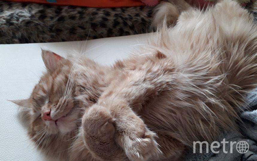 Наш Мультик спит, как человек! Фото Анна