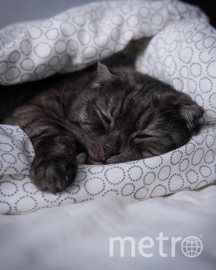 Спящего красавца зовут Филя, Филипп или просто Мохнатые орешки. Спать - его главное хобби. Фото Юлия