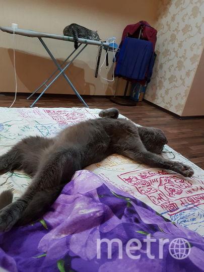 Шурик. Фото Юля