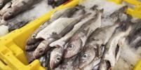 Как приготовить рыбу и не подцепить паразитов