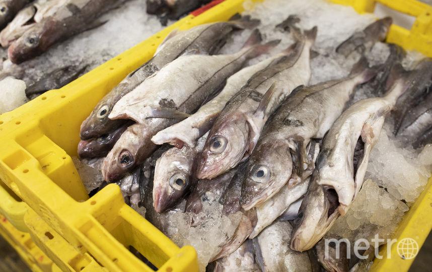 Рыба. Фото Getty