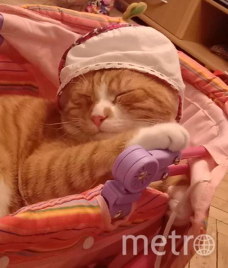 """Наш малыш Фантик обожает спать в коляске и чтобы непременно его катали. Фото Ольга Дзенит, """"Metro"""""""