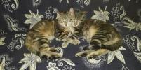 Любят спать и делают это красиво: смешные фото котов