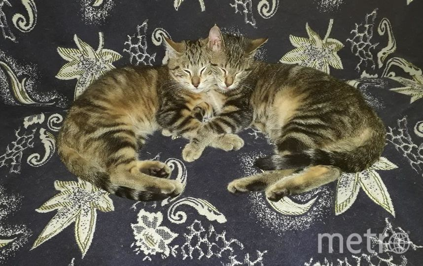 "Кузя и Лиза отдыхают. Фото Марина Жукова, ""Metro"""