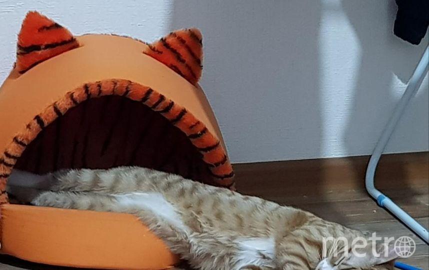 """Фредди любитель спать в своём домике и не важно удобно ему или нет! Фото """"Metro"""""""