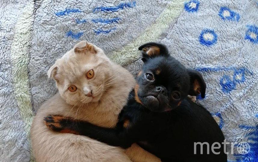 """Это наши: пёс - Буч и кот - Оскар, друзья с детства. Фото Юлия, """"Metro"""""""
