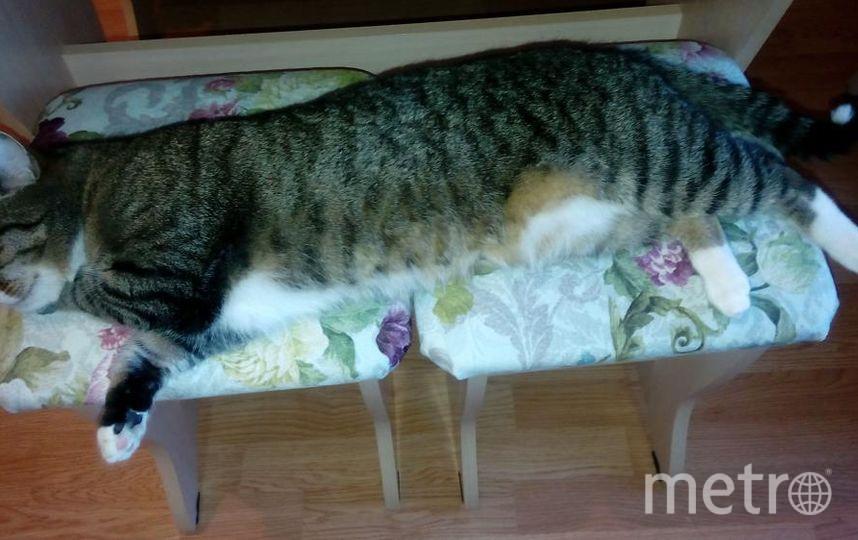 """Мой котик Лютик. Мне кажется, он улыбается во сне. Анна. Фото """"Metro"""""""
