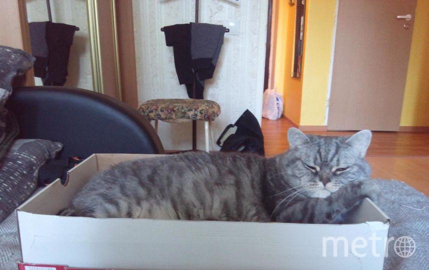 """Решил поучаствовать в Вашем конкурсе и выслать фотографию нашего семейного любимца, кота Елизара. Он уже в довольно почтенном возрасте, ему почти 14 лет. Тем не менее никогда не упускает возможность хорошенько выспаться в какой-нибудь новой коробочке. На этом фото он дремлет в своём новом """"домике"""". Фото Валерий, """"Metro"""""""