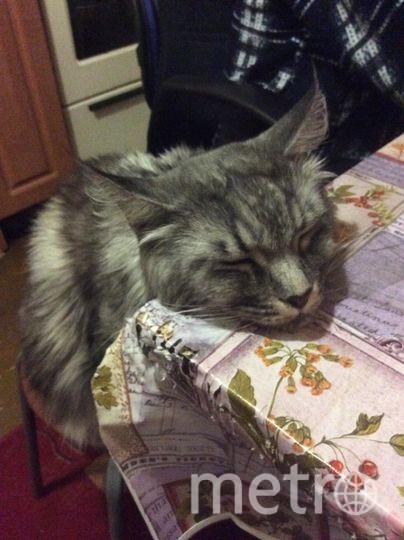 """Нашему котику Марсику 3года. Он любит поспать где удобно и где неудобно, лишь бы рядом с хозяевами.. Фото """"Metro"""""""