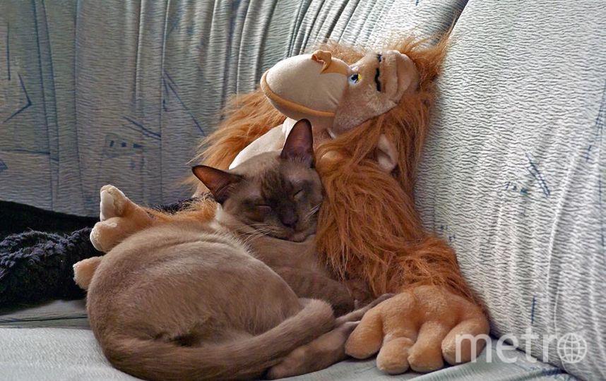 "Хорошо спится в объятиях мечтающего друга. Фото Валентина Харламова, ""Metro"""