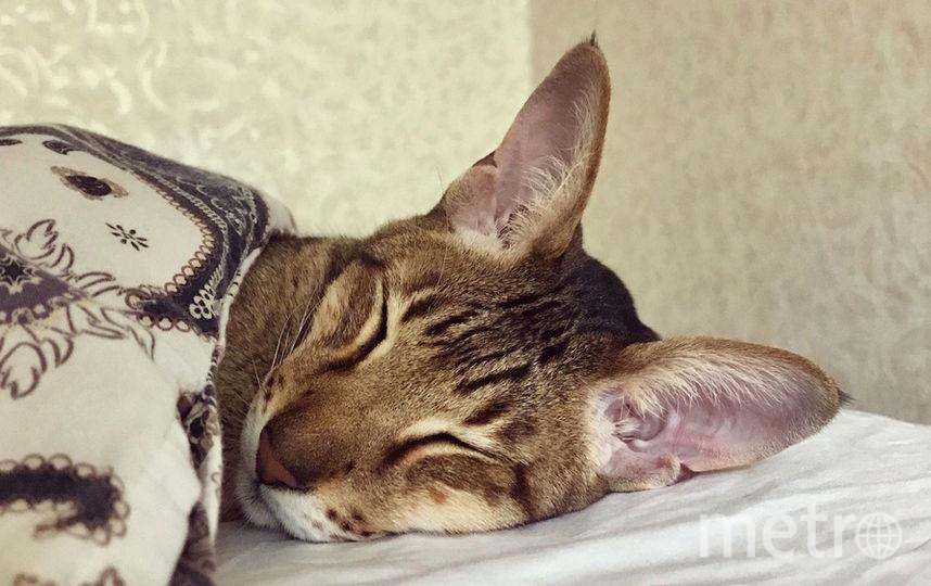 """Меня зовут Марсик, мне 7 лет. Порода – ориентальная кошка. Люблю поваляться на батарее или рядом с ней и плотно покушать. Подпись к фото я бы написал так: """"Любите ли вы комфорт так, как люблю его я!"""". Фото Наталия"""