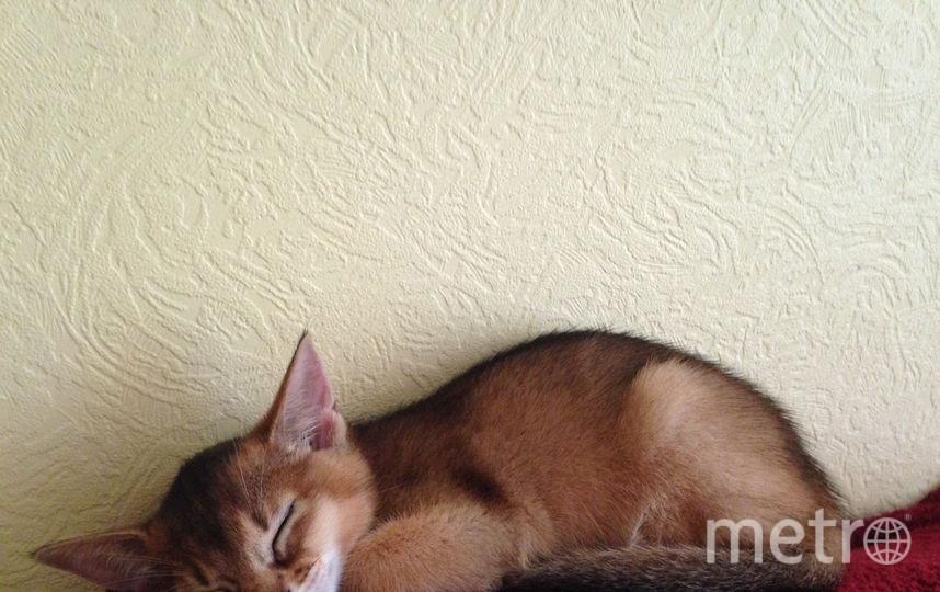 Кошечка Ася. Фото Виктория