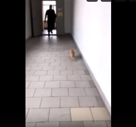 В Петербурге охранник университета ударил беременную кошку об пол. Фото скриншот видео https://vk.com/pushkin_story