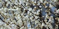 Роспотребнадзор рассказал, что делать при аллергии на пыльцу