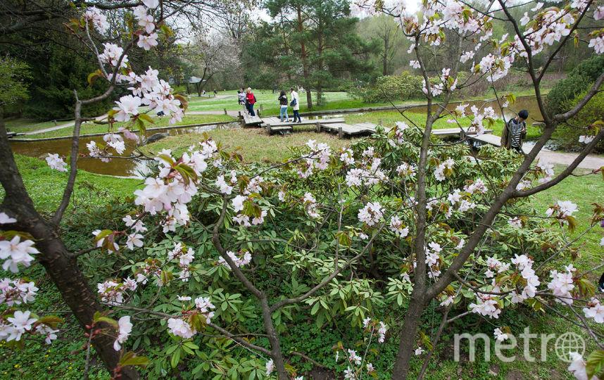 Цветение деревьев весной. Фото Василий Кузьмичёнок