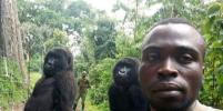 Удивительное рядом: гориллы сделали селфи с рейнджером