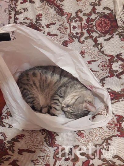 """На фото моя любимая спящая кошка Малышка. Читательница газеты Metro и хозяйка кошки Элеонора. Фото """"Metro"""""""