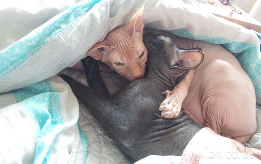 """Это наши любимцы: светлый - Алекс, чёрный - Кратос, они любят спать вместе!). """"Баю-бай, баю-бай, спи мой братец, засыпай!. Фото Ирена Суркис, """"Metro"""""""