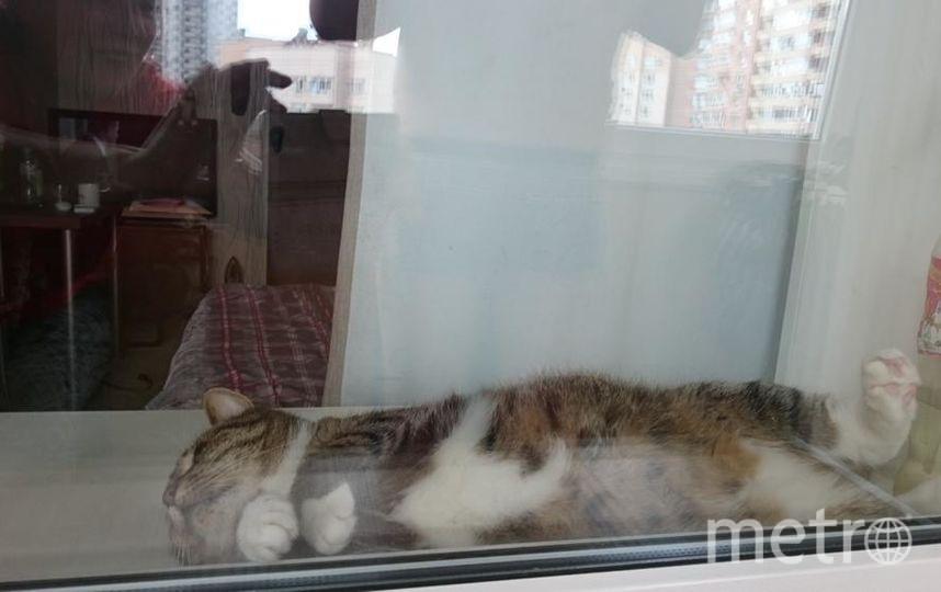 """Это наш кот Вася,он спит везде и почти всегда)Особенно любит места,где,казалось бы спать неудобно,но ему очень комфортно,как ни странно. Фото Екатерина, """"Metro"""""""