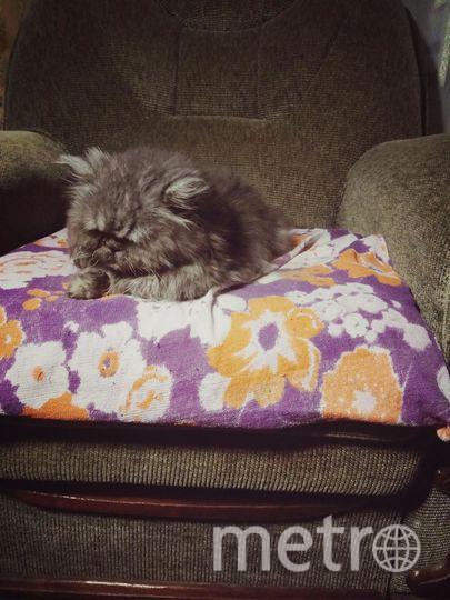 "Меня зовут Любовь. Любимец- старый кот Харис. Фото ""Metro"""