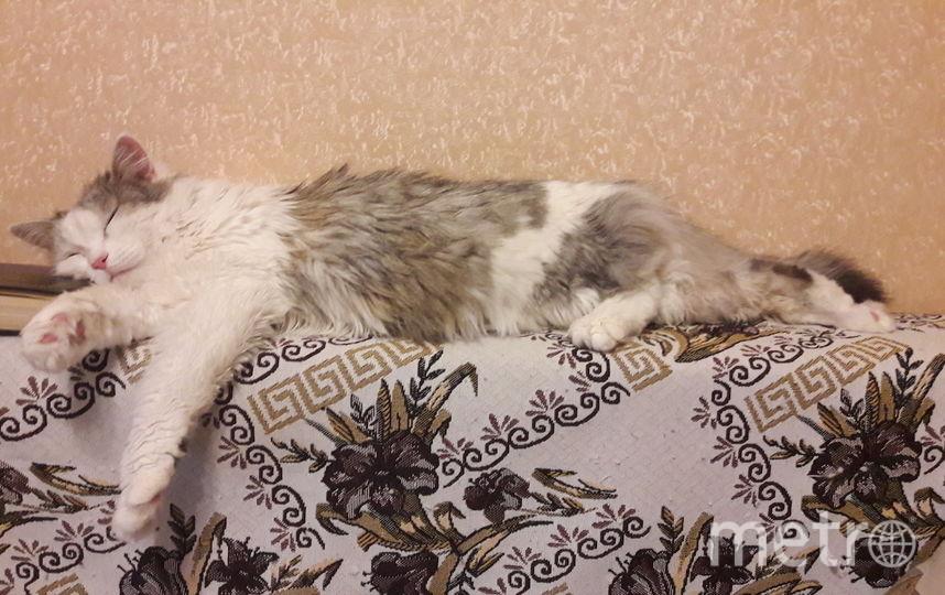 Кот-ученый! Кошка Муза умеет читать во сне. Фото Елена