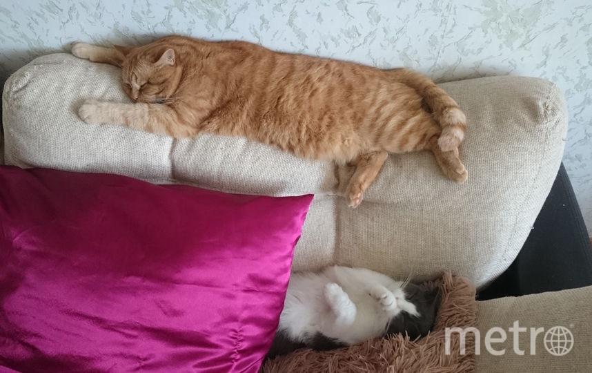 Рыженький плюша по имени Ройс любит спать на диванной подушке. Фото Александра