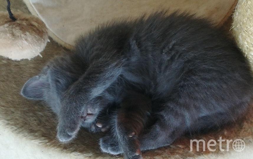 Кот Джедай. Фото Татьяна