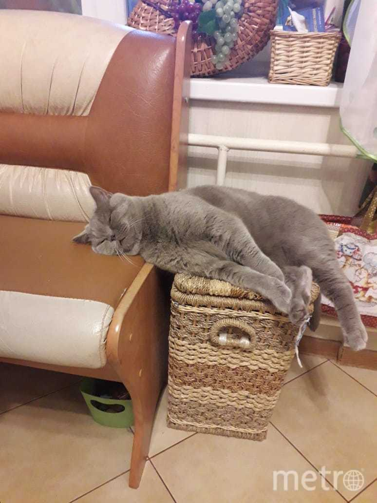 Кот Тайчер ,зачем спать на кровати или пуфике,лучше на корзинке. Фото Мария