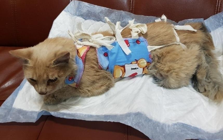 Кошка после операции приходит в себя: в стационаре она пробудет еще дней пять. Фото vk.com/podslyshano_pushkin_glavnoe