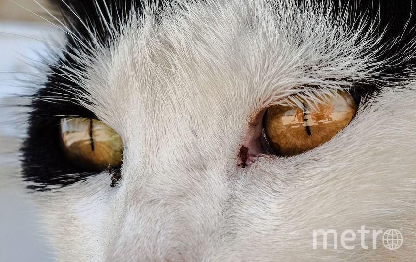 Петербургские зоозащитники предлагают ввести новый институт – уполномоченного по правам животных. Фото Pixabay.com