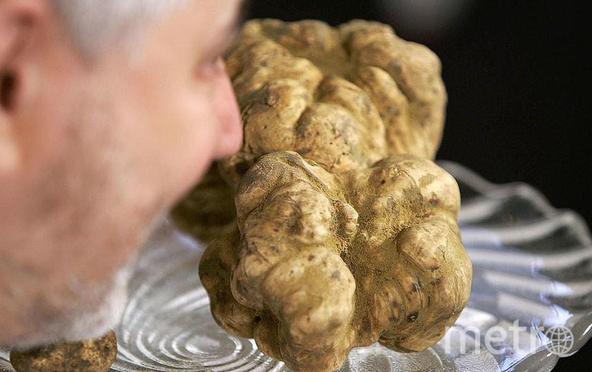 Белый трюфельный гриб. Фото Getty