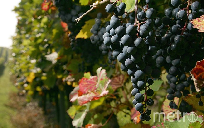 Виноград. Фото Getty