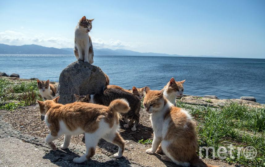 В Австралии кошек признали вредителями. Фото Getty