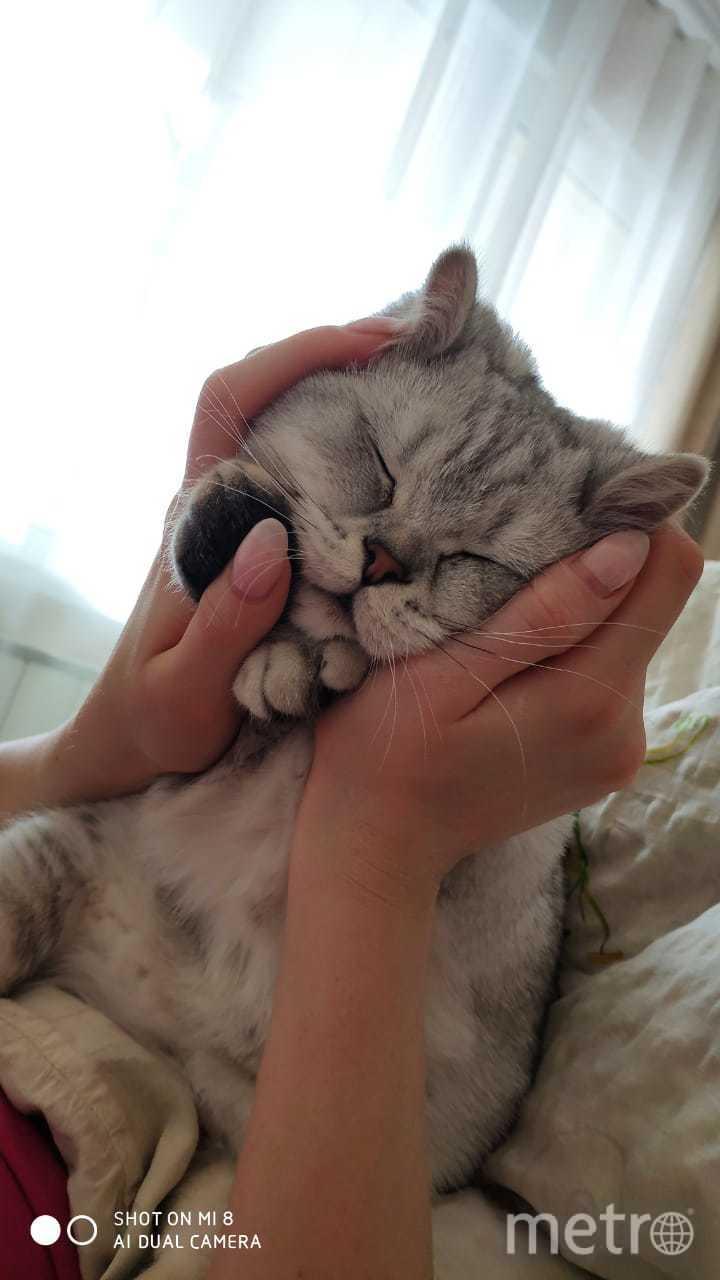 Знакомьтесь, жидкий кот Маркус. Спит в любой позе. Фото Ксения