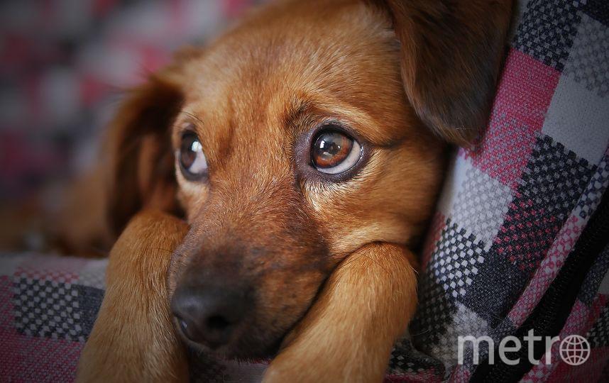 Собаки смогут снять стресс. Фото Pixabay