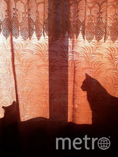 """""""С добрым утром, любимая!"""" На утренних лучах солнца просыпается кошка Сима и кот Рыжий терпеливо ждет, не будит. Фото Ольга, """"Metro"""""""