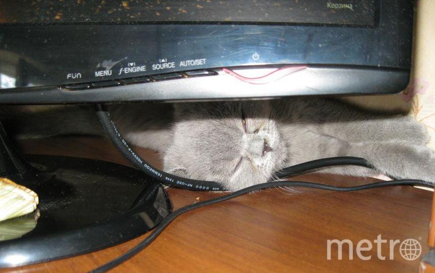 "Александр. Кошка Агата на страже интернета.. Фото ""Metro"""