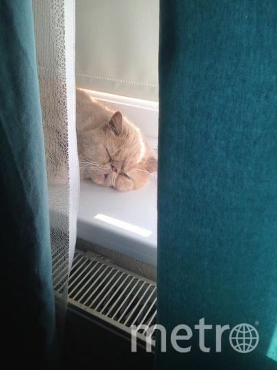 """Наш котик Кени. Фото От Ирины, """"Metro"""""""